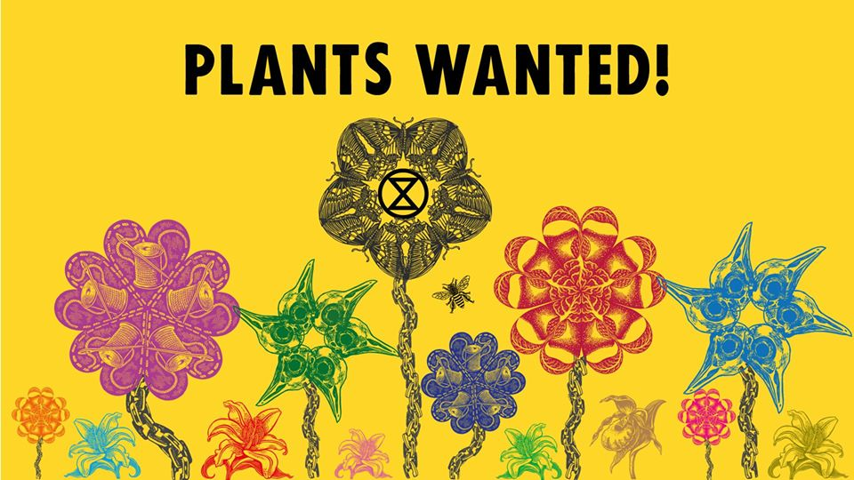 Plants Wanted decorative graphic