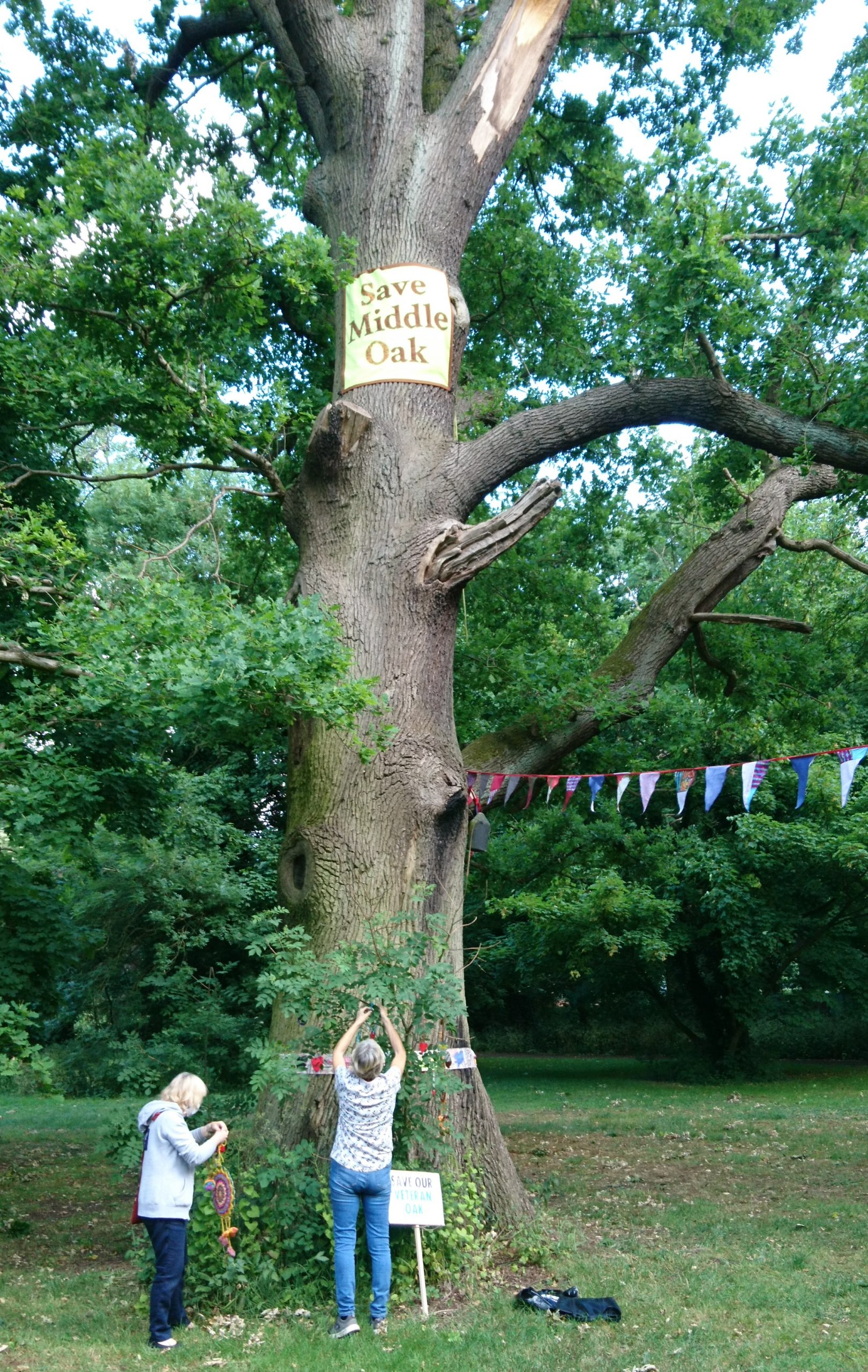 Decorating the veteran oak tree